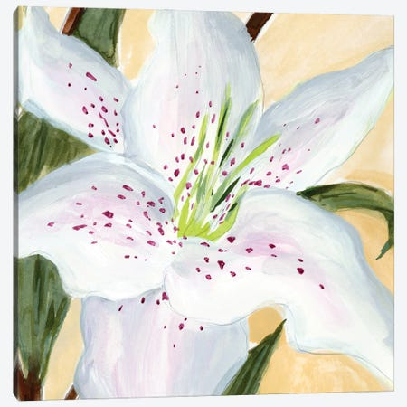 White Lily I Canvas Print #AWR111} by Annie Warren Canvas Art