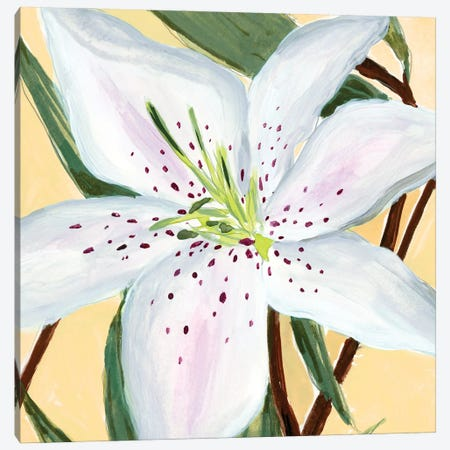 White Lily II Canvas Print #AWR112} by Annie Warren Canvas Art