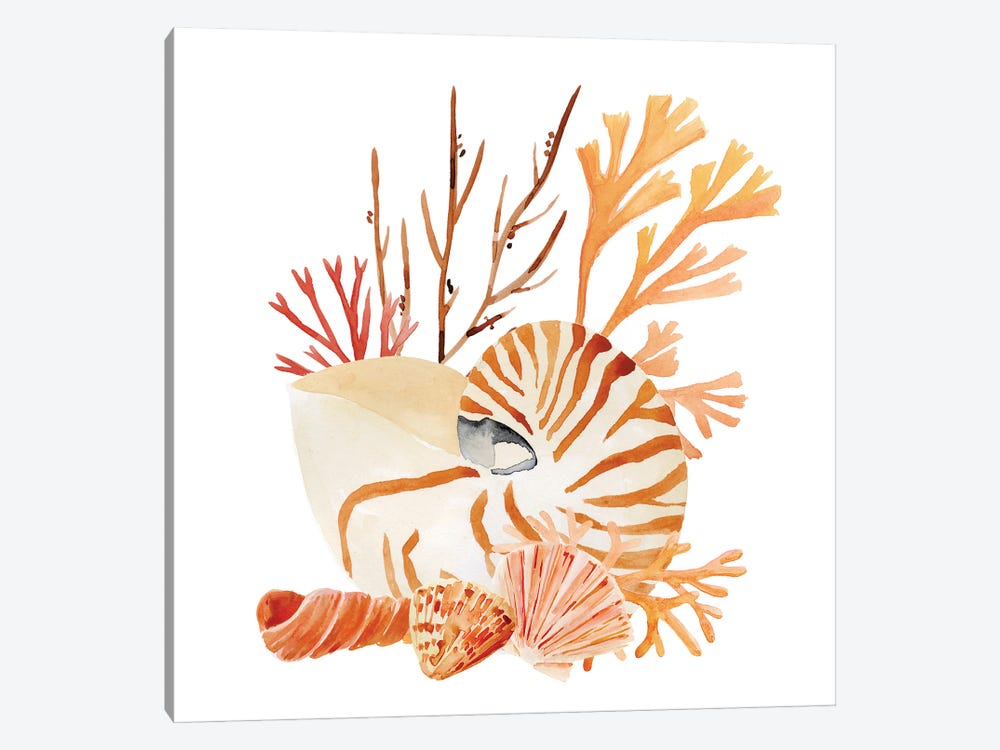 Nautilus Grouping I by Annie Warren 1-piece Art Print