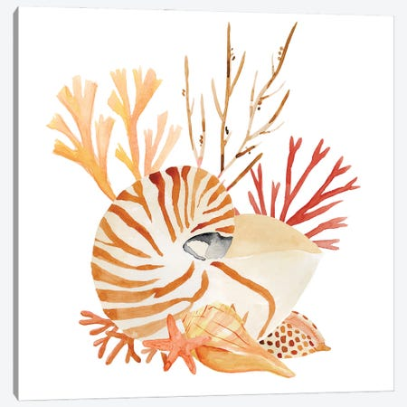 Nautilus Grouping II Canvas Print #AWR120} by Annie Warren Canvas Art Print