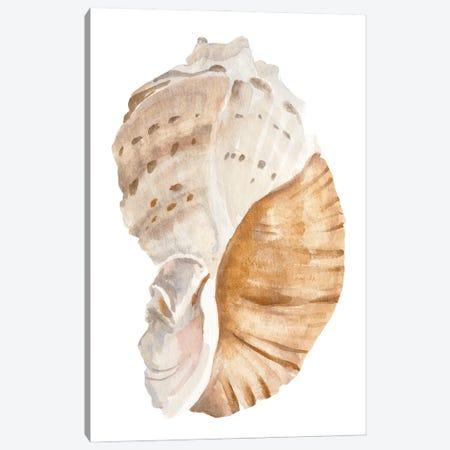 Seashell I Canvas Print #AWR243} by Annie Warren Canvas Wall Art