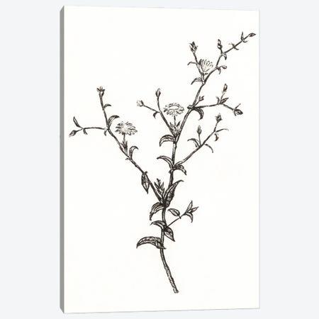 Wild Bloom Sketch II Canvas Print #AWR260} by Annie Warren Canvas Wall Art