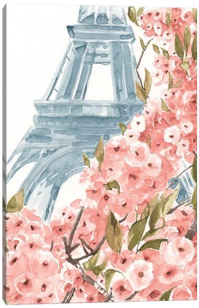 Paris Cherry Blossoms II Canvas Art Print