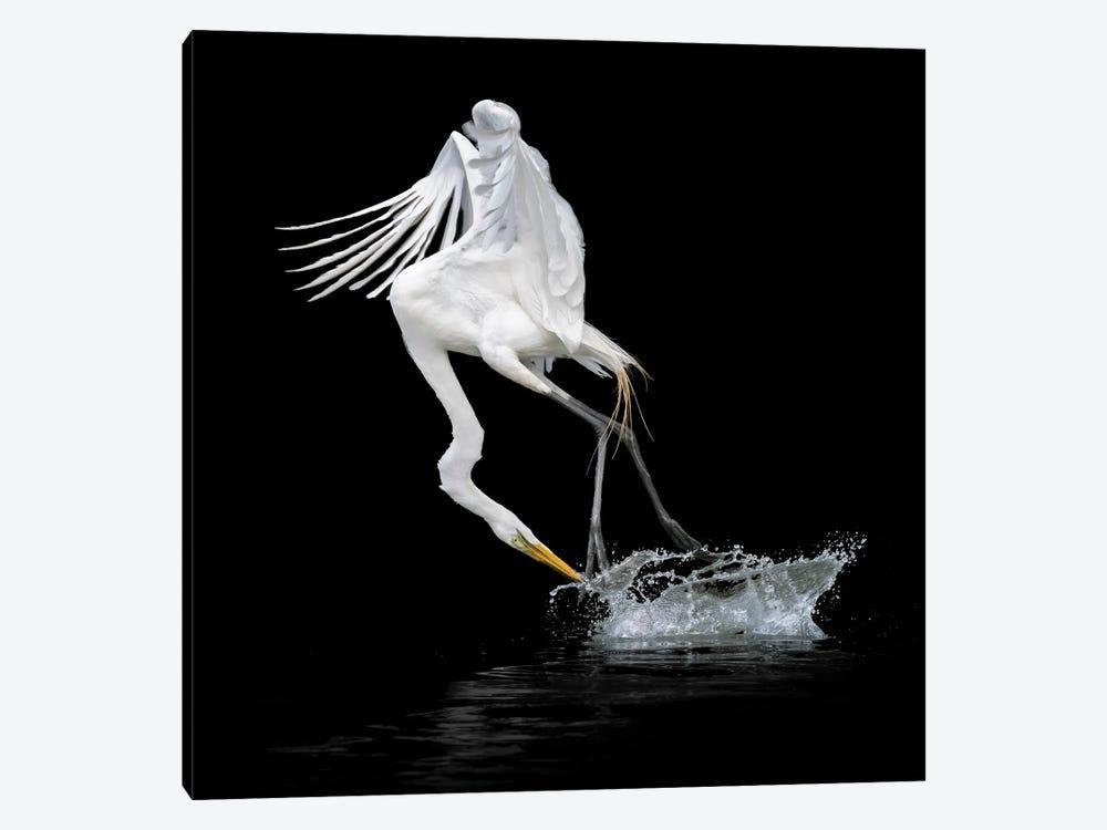 Out of Water by Alex Li 1-piece Art Print