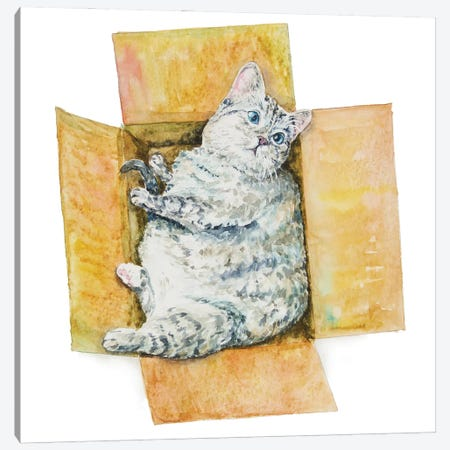 Fat Cat In The Box Canvas Print #AXS25} by Alexey Dmitrievich Shmyrov Canvas Print