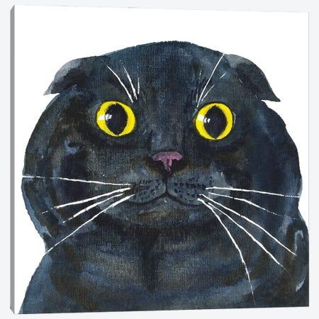 Fat Scottish Fold Black Cat Canvas Print #AXS26} by Alexey Dmitrievich Shmyrov Canvas Art Print