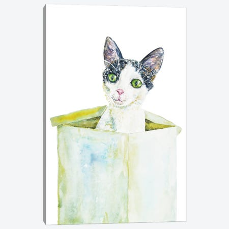 Funny Cat In The Box Canvas Print #AXS28} by Alexey Dmitrievich Shmyrov Canvas Art