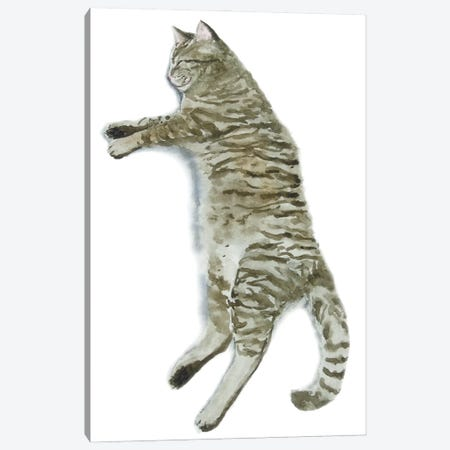 Sleeping Tabby Cat II Canvas Print #AXS59} by Alexey Dmitrievich Shmyrov Art Print