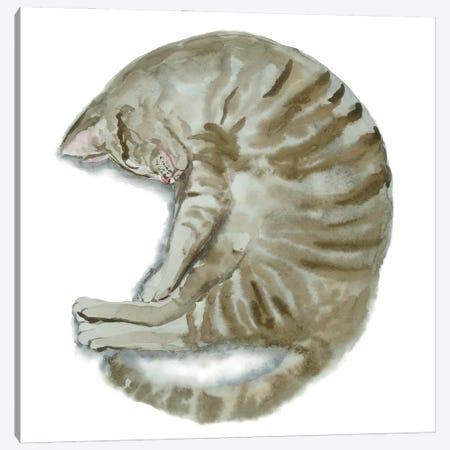 Sleeping Tabby Cat III Canvas Print #AXS60} by Alexey Dmitrievich Shmyrov Canvas Artwork