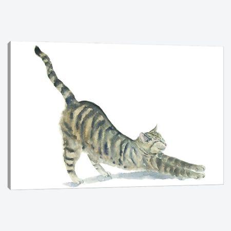 Tabby Yoga Cat Canvas Print #AXS80} by Alexey Dmitrievich Shmyrov Canvas Artwork