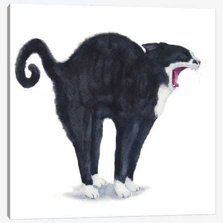 Tuxedo Stretching Cat Canvas Print #AXS83} by Alexey Dmitrievich Shmyrov Canvas Wall Art