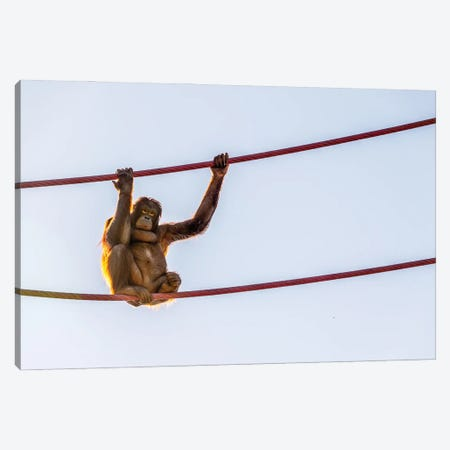 On The Wire Canvas Print #AXT117} by Alex Tonetti Canvas Artwork