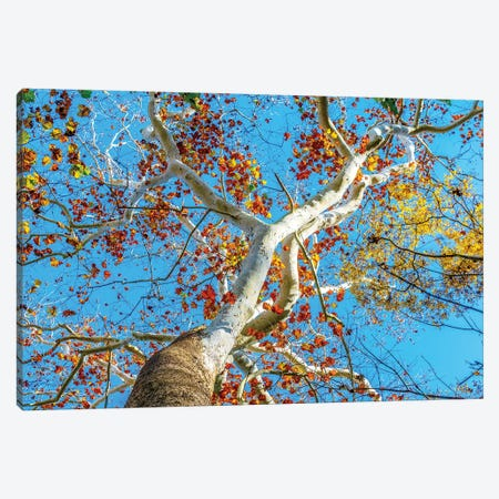 Rainbow Tree Canvas Print #AXT128} by Alex Tonetti Canvas Wall Art