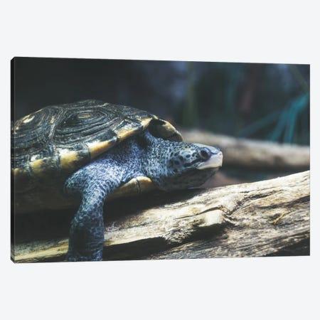 Testudo The Turtle Canvas Print #AXT160} by Alex Tonetti Canvas Wall Art