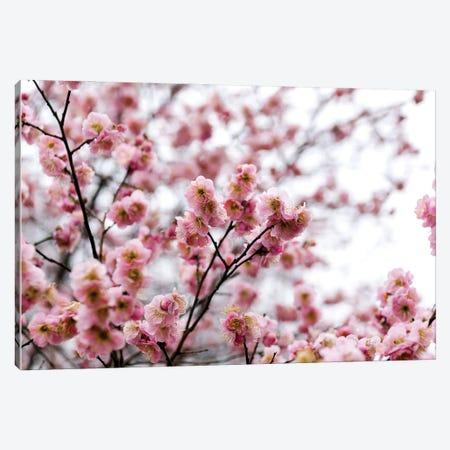 The First Bloom Canvas Print #AXT161} by Alex Tonetti Canvas Artwork