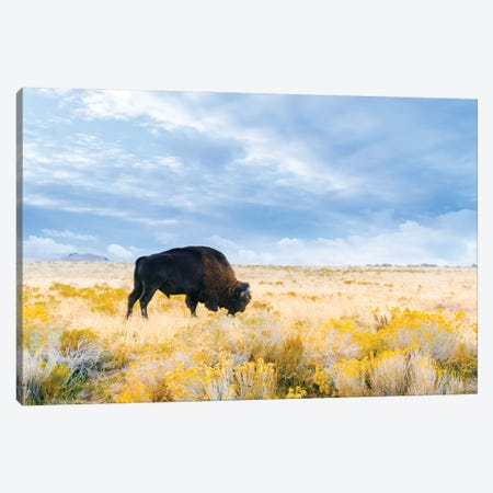 The Great American Bison Canvas Print #AXT162} by Alex Tonetti Canvas Art