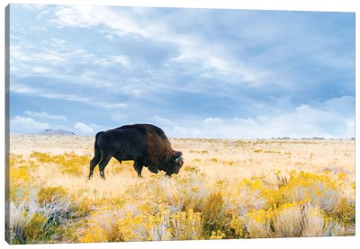 The Great American Bison Canvas Art Print