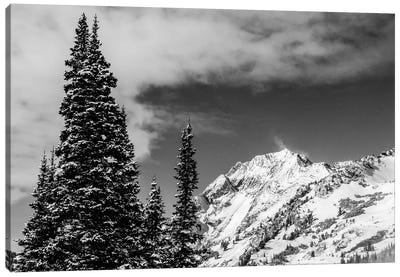 Trees Taller Than The Highest Peak Canvas Art Print