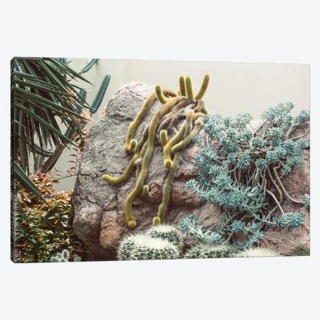 Crawling Cacti Canvas Print #AXT244} by Alex Tonetti Canvas Artwork