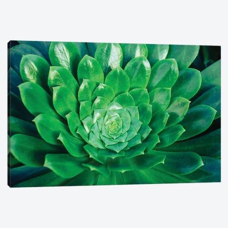 Green Goddess Canvas Print #AXT273} by Alex Tonetti Canvas Art