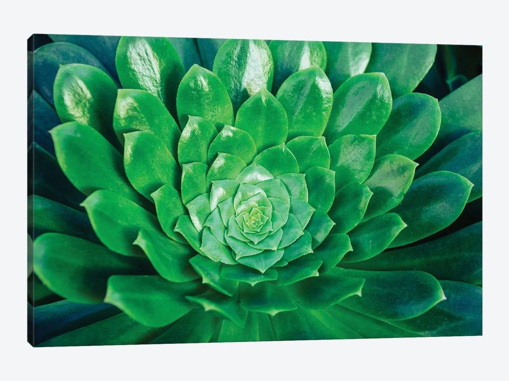 Green Goddess by Alex Tonetti 1-piece Canvas Artwork