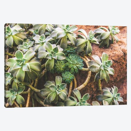 Hens And Chicks Canvas Print #AXT280} by Alex Tonetti Canvas Print