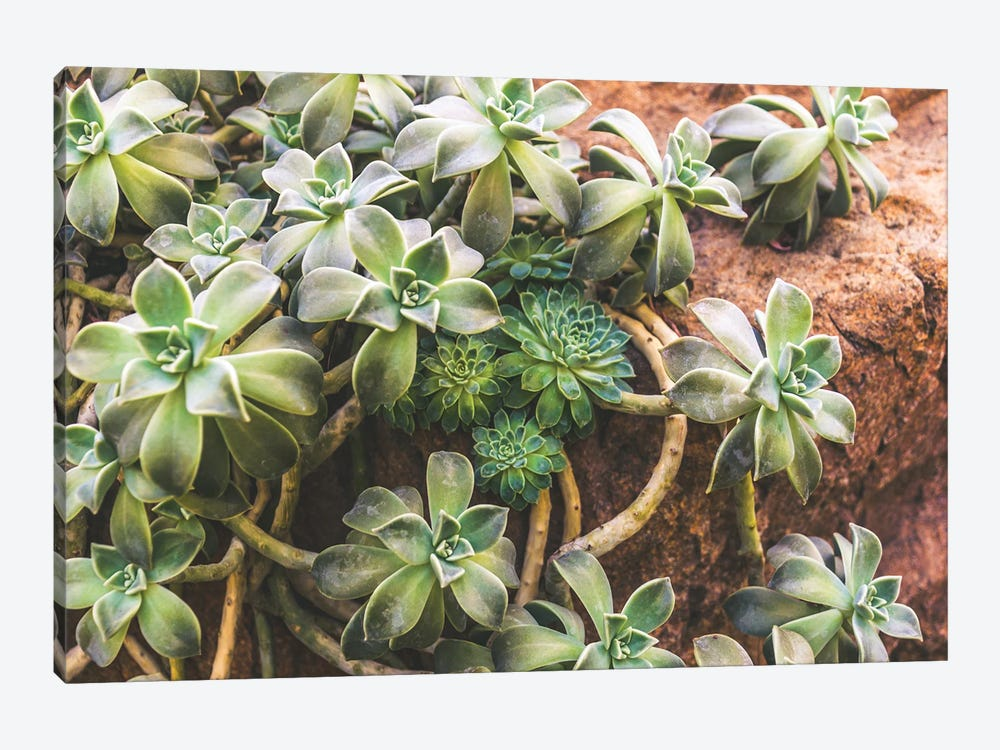 Hens And Chicks by Alex Tonetti 1-piece Canvas Wall Art