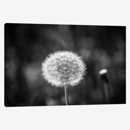 Make A Wish Canvas Print #AXT305} by Alex Tonetti Canvas Print