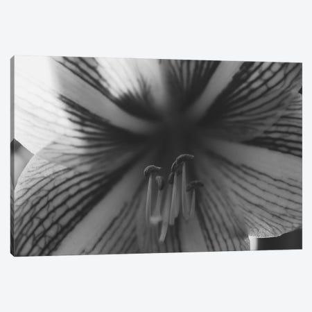Orchid Noir Canvas Print #AXT320} by Alex Tonetti Canvas Wall Art