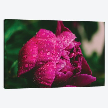Passion Pink Canvas Print #AXT327} by Alex Tonetti Canvas Art Print