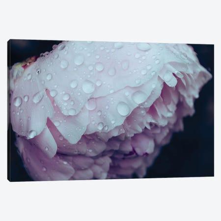 Pretty Petals Canvas Print #AXT332} by Alex Tonetti Art Print
