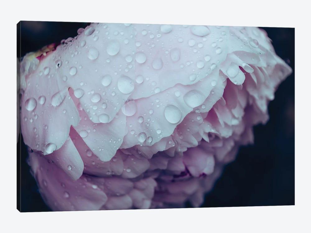 Pretty Petals by Alex Tonetti 1-piece Canvas Art