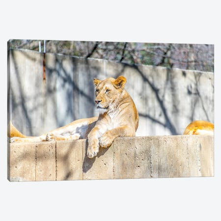 Purrfect Canvas Print #AXT336} by Alex Tonetti Canvas Art