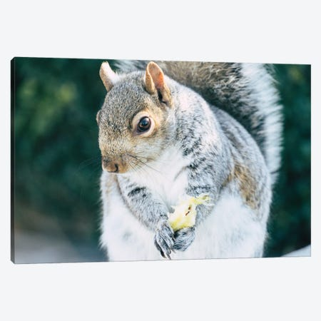 Squirrely Snacks Canvas Print #AXT346} by Alex Tonetti Canvas Art Print
