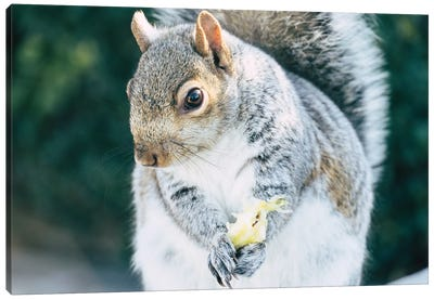 Squirrely Snacks Canvas Art Print