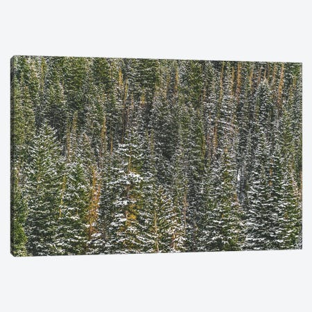 The Forest For The Trees Canvas Print #AXT363} by Alex Tonetti Canvas Wall Art