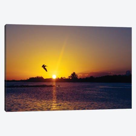 Tropical Pelican Sunset Canvas Print #AXT373} by Alex Tonetti Canvas Art Print