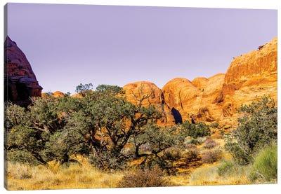 Desert Dreams Canvas Art Print