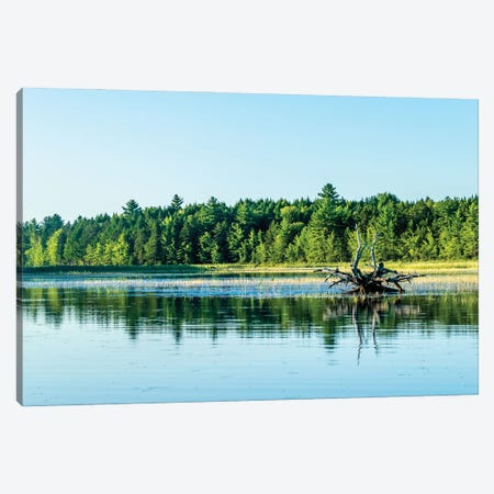 Driftwood Reflection Canvas Print #AXT56} by Alex Tonetti Art Print
