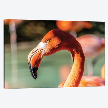 Eye Of The Flamingo Canvas Print #AXT59} by Alex Tonetti Canvas Art