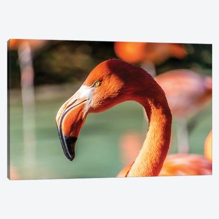 Eye Of The Flamingo Canvas Print #AXT59} by Alex Tonetti Canvas Art