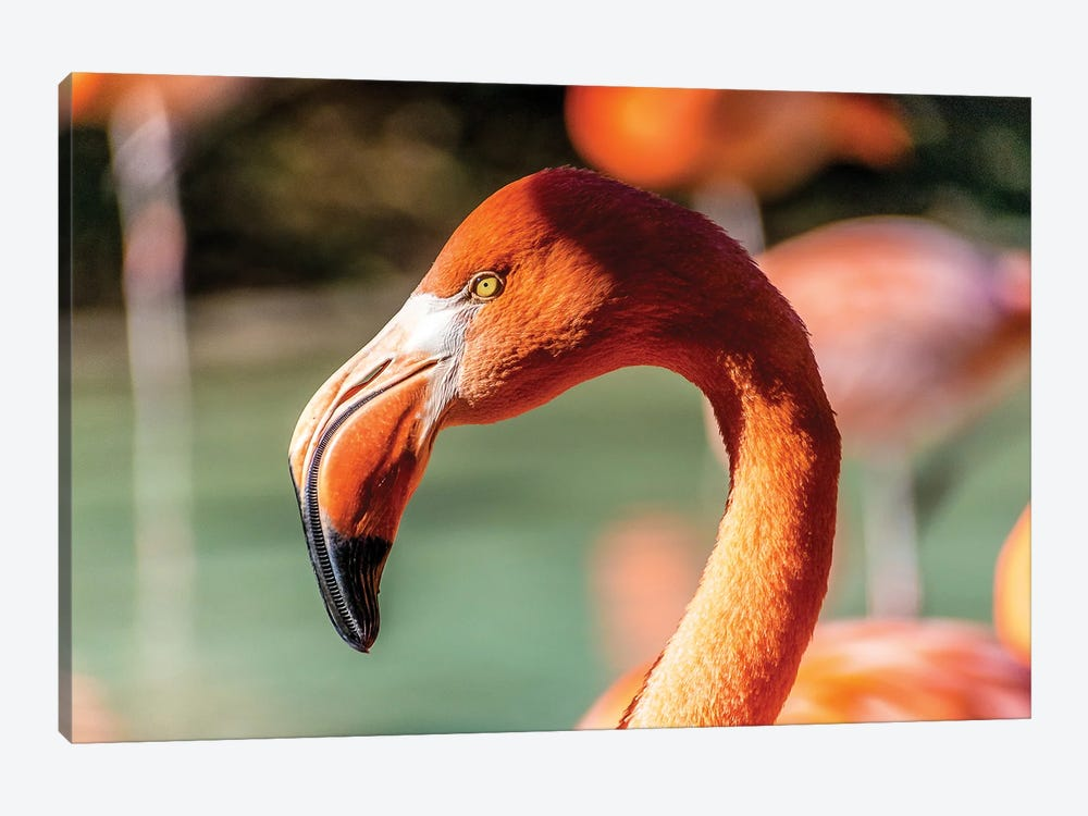 Eye Of The Flamingo by Alex Tonetti 1-piece Canvas Print