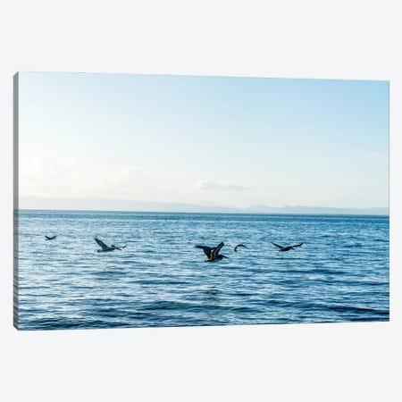 Flying Flock Canvas Print #AXT66} by Alex Tonetti Canvas Wall Art