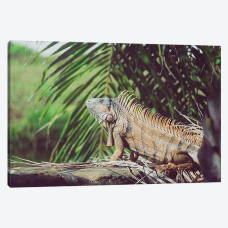 Iggy Canvas Print #AXT83} by Alex Tonetti Canvas Print