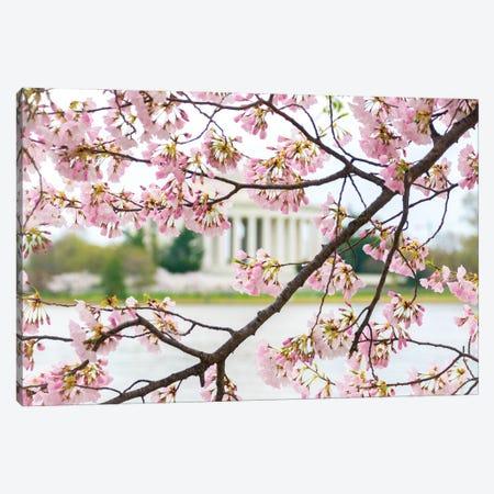 Jefferson Through The Blossoms Canvas Print #AXT89} by Alex Tonetti Canvas Art Print