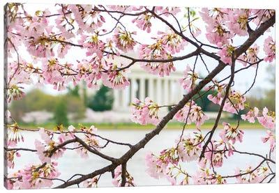 Jefferson Through The Blossoms Canvas Art Print