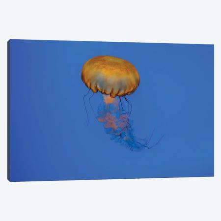 Jelly Canvas Print #AXT90} by Alex Tonetti Canvas Art