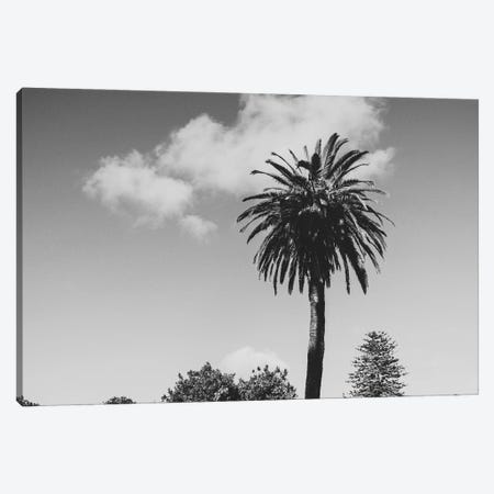 Keep Palm, And Carry On Canvas Print #AXT92} by Alex Tonetti Canvas Wall Art