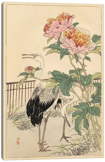 Crane And Peony Canvas Art Print