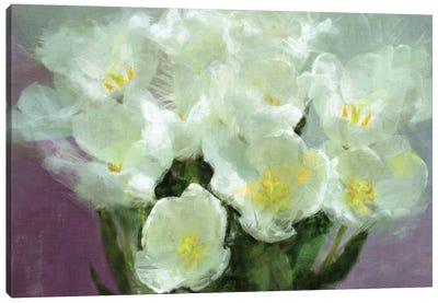 Sunlit Tulips Canvas Art Print